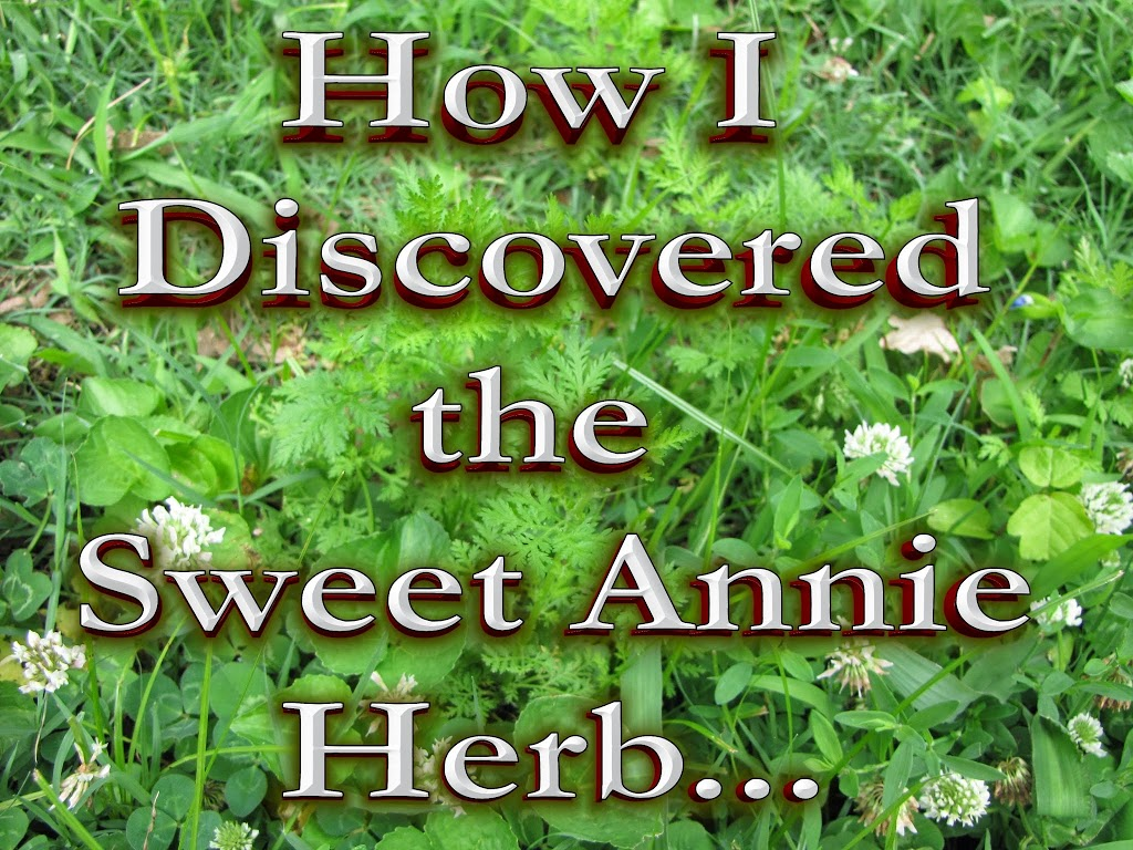 """sweet annie - love, home and health"""