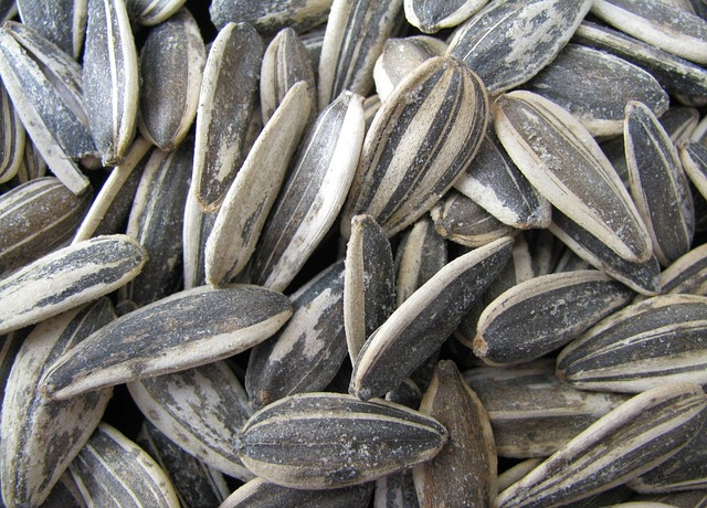 Craving Sunflower Seeds at www.LoveHomeandHealth.com