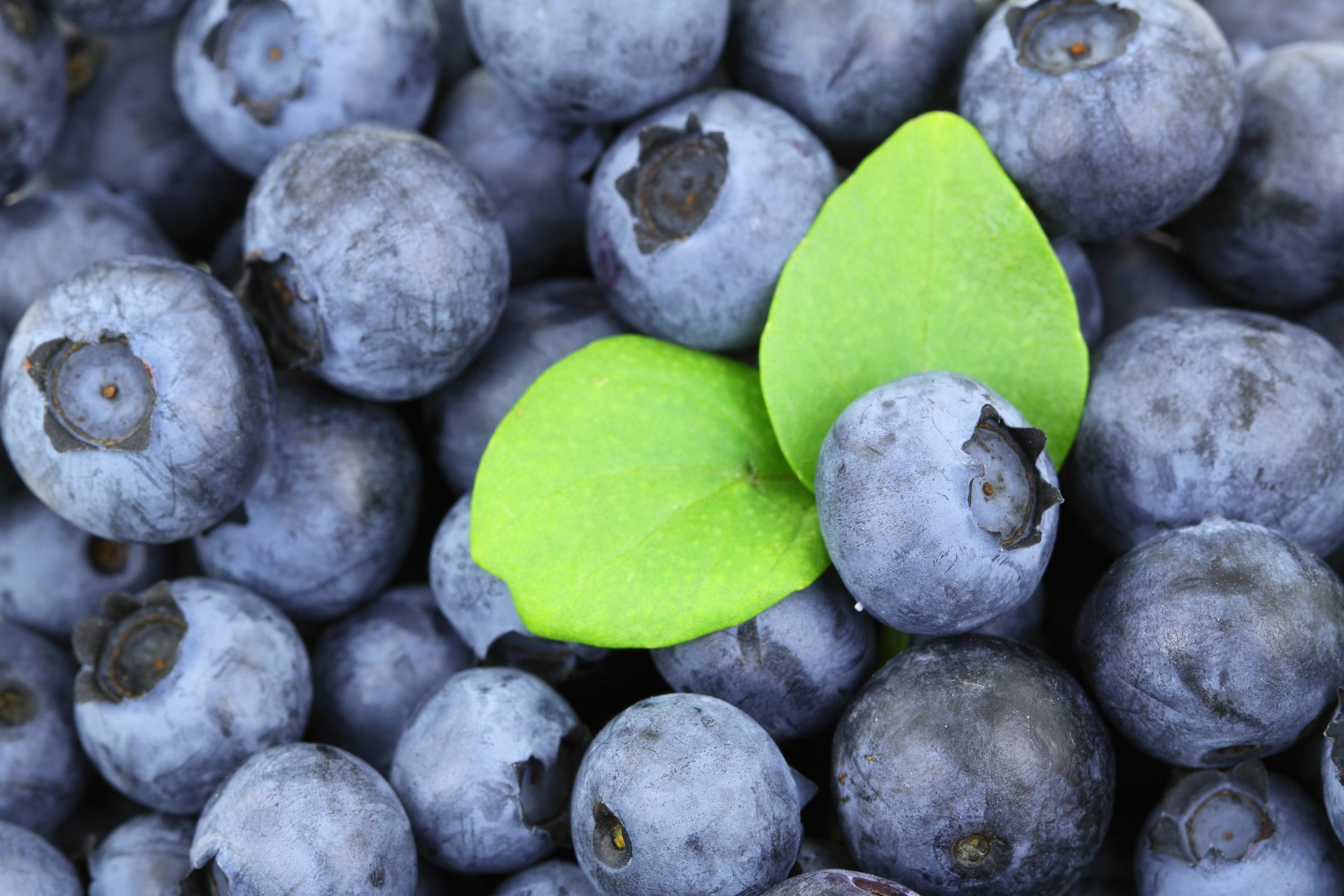 The Magic of Blueberries – A True Superfood